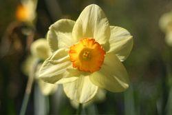 IMG_1362-flower